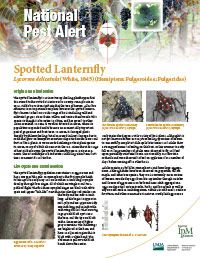 Regional IPM Centers Spotted Lanternfly Pest Alert