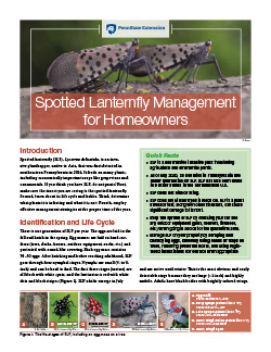Spotted Lanternfly Management for Homeowners