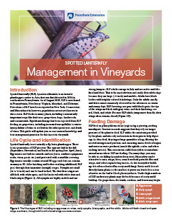 Spotted Lanternfly Management in Vineyards